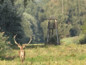 Grand 13 cors chasse Croatie