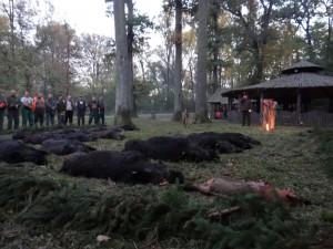 Battue de sangliers en Croatie chasse