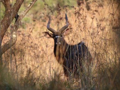 AFRIQUE DU SUD Territoires ouverts sans grillages