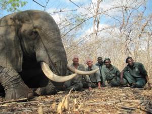Safari chasse Elephant Mozambique