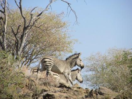 NAMIBIE Séjour de chasse à Okatore