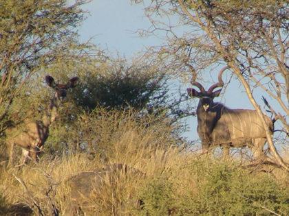 NAMIBIA – Free range hunting
