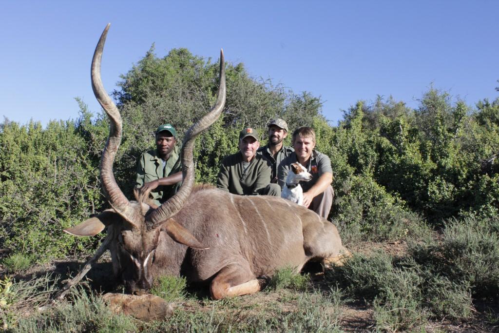 grand koudou safari chasse afrique du sud