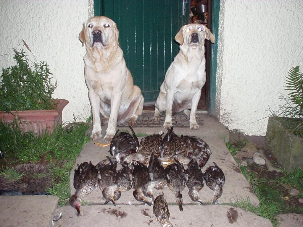 ouverture-canard-sejour-de-chasse-en-ecosse
